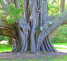 Irish Roots by Fara