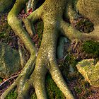 Roots of Life by Keld Bach