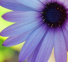 I'll Give You A Daisy A Day .... by Sharon House
