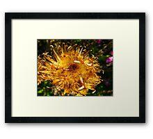 Golden sprinkles Framed Print