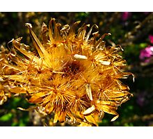 Golden sprinkles Photographic Print