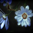 Glow by Judi Taylor