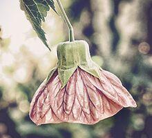 chinese lantern by © Karin  Taylor