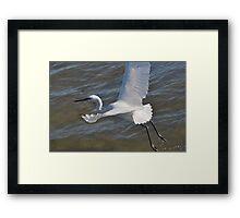 White Morph Reddish Egret Framed Print