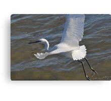 White Morph Reddish Egret Canvas Print