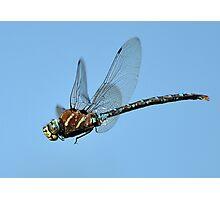 Flight of the Dragon Photographic Print