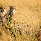 Cheetah - Mum & Cub by Roger  Mackertich