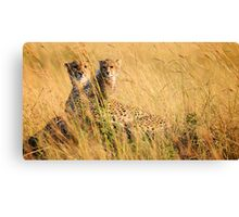 Cheetah - Mum & Cub Canvas Print