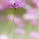 Everlasting in Pink by Jill Fisher