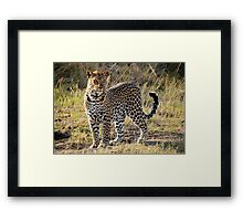 The African Leopard Framed Print