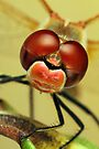 Dragonfly close-up by jimmy hoffman