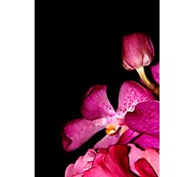 Fifty Shades of Magenta Photographic Print