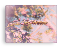 wistful wisteria Canvas Print