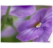 perfectly pansy Poster