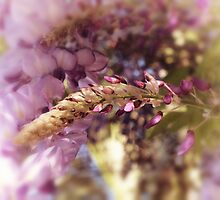 wisteria by © Karin  Taylor