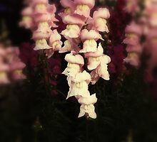 snap dragons by © Karin  Taylor