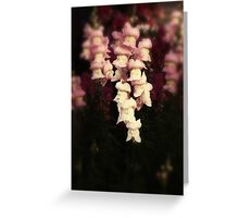 snap dragons Greeting Card