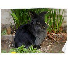 Lion Head Rabbit Poster