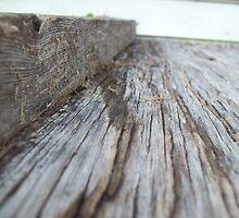 morning wood by koltonomore