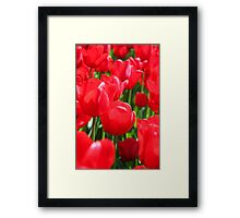 Field Of Red Tulips Framed Print
