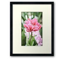 Tulip 1 Framed Print