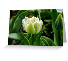 Tulip 2 Greeting Card