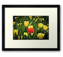 The way to stand out in a crowd Framed Print