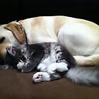 Ruffles & Mr Whiskers, snooz time by kenea