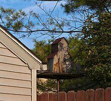 Birdhouse by Joy  Rector