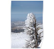 Israel, Hermon Mountain, tree covered with snow  Poster