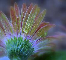 Rain Petals by MichelleAyn