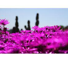 Desert Flowers Photographic Print
