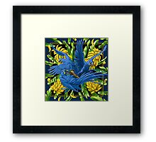 Hyacinth Macaws and Bananas Stravaganza (black background) Framed Print