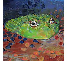 African bullfrog Photographic Print