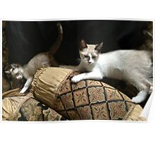 RENAISSANCE CATS Poster