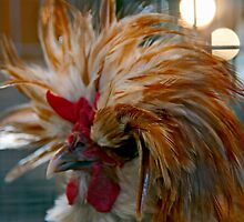 Majestic Mystery Chicken by phil decocco