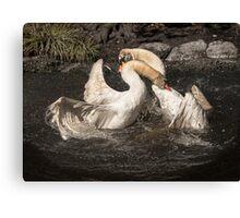 Swan Fight Canvas Print