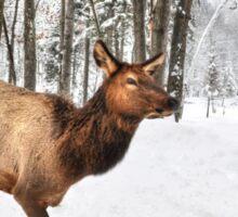 Walking in a Winter Wonderland - She Elk Sticker