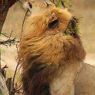 Laying claim by Explorations Africa Dan MacKenzie