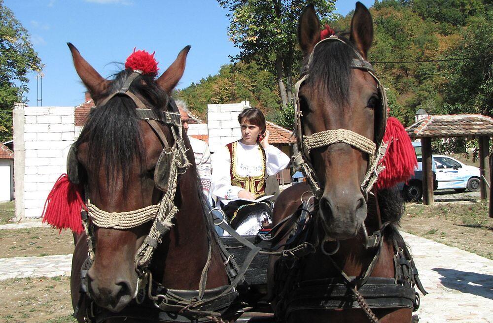 Vesna - Between Horses by branko stanic