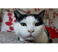 Mr Smudge Super Cat Photographic Print