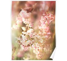 A Blur Of Pink Weeping Willow Poster