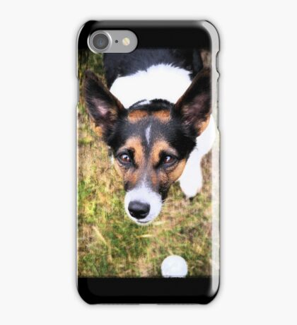 Jessie the Jack Russell Terrier: It's All About the Ball iPhone Case/Skin