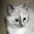 Misty My Sweet Kitty! by Rose Landry