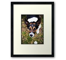 Jessie the Jack Russell Terrier: It's All About the Ball Framed Print