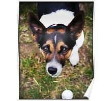 Jessie the Jack Russell Terrier: It's All About the Ball Poster