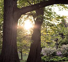 Sunshine Trees by Shutterbug21