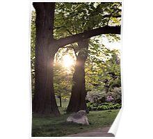Sunshine Trees Poster