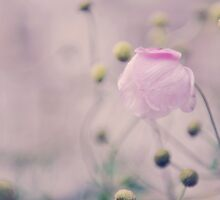 Vintage Bobble Flower by Shutterbug21