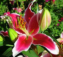 Sunkissed Stargazer Lily and Buds by MidnightMelody